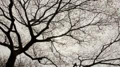 Silhueta de uma árvore no campus. Foto: Marcos Santos/USP Imagens