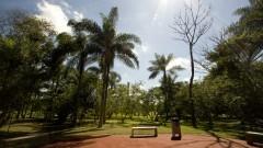 Verde na Praça do Relógio da Cidade Universitária: Marcos Santos/USP Imagens
