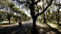 Avenida da Universidade. Foto: Marcos Santos/USP Imagens