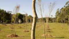Plantio de árvores. Foto: Marcos Santos/USP Imagens