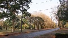 Detalhe para estrada de paralelepípedo no Campus de Ribeirão Preto. Foto: Marcos Santos / USP Imagens