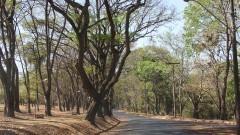 Detalhe para vegetação no Campus de Ribeirão Preto. Foto: Marcos Santos / USP Imagens