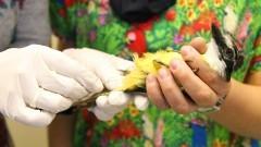 Ambulatório de Aves do Hospital Veterinário da USP. Foto: Marcos Santos/usp imagens