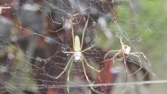 Aranhas Armadeiras