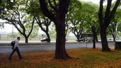 Pétalas de flores no chão do campus. Foto: Jorge Maruta/Jornal da USP