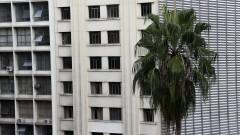 Detalhe de palmeira em meio a prédios da região central da cidade de São Paulo. Foto: Cecília Bastos/Jornal da USP