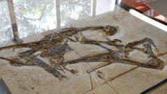 Exposição Fósseis do Araripe no Instituto de Geociências (IGc)