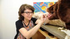 reg. 065-16 FMVZ Julia Maria Matera - vencedora do concurso World Animal Protection (2015). 2016/03/04 Foto: Marcos Santos/USP Imagens
