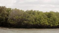 Mangue. Foto: Marcos Santos/USP Imagens