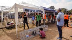 Festa de adoção de pets (cachorros e gatos) do projeto CORACÃO no Festival Jaya, local: Parque da Juventude, São Paulo-SP. Foto: Cecília Bastos.