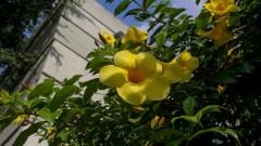 Flores de jardim