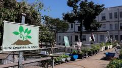 Horta Comunitária da Faculdade de Medicina. Foto Cecília Bastos/Usp Imagem Reg. 241-16