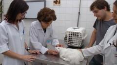 Profª Julia Maria Matera, no Hospital Veterinário da USP. Foto: Francisco Emolo / Jornal da USP