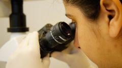 Laboratório Cultivo de celulas tronco e terapia Ciência no campus de Pirassununga. Foto: Cecília Bastos/USP Imagem