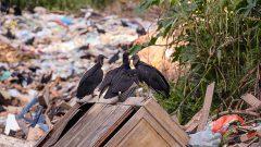 Lixão a céu aberto da cidade de Monte Negro/Rondônia. Foto: Cecília Bastos/USP Imagens