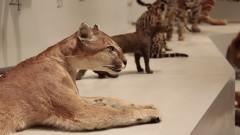 MZ. Detalhe da exposição Biodiversidade conhecer para Preservar. Foto: Marcos Santos/USP Imagens