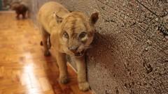 Museu de Zoologia. Exposição Biodiversidade conhecer para preservar II