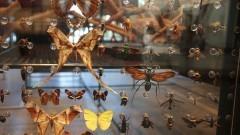 O Museu de Zoologia convida a todos olharem mais de perto para a Biodiversidade e a conhecerem um pouco do que ajudamos a construir, no intuito de preservá-la. Esta missão é de todos nós. Sem a Biodiversidade, não existimos. Foto: Marcos Santos/USP Imagens