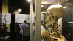 ICB. Reinauguração do Museu de Anatomia Professor Alfonso Bovero.  2017/05/25 Foto: Marcos Santos/USP Imagens