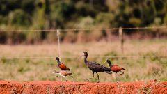 Pássaros no campus de Pirassununga. Foto: Cecília Bastos/USP Imagem