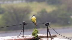 Pássaro. Foto: Jorge Maruta/Jornal da USP