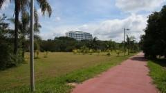 Detalhe de vegetação da Praça do Relógio com o prédio da Reitoria ao fundo. Foto: Marcos Santos/USP Imagens