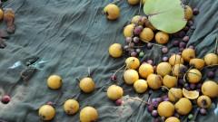 Detalhe de porção de sementes da Feira de Trocas de Sementes Crioulas que aconteceu no aterro do Flamengo (Rio de Janeiro - capital) durante o evento Rio+20. Foto: Cecília Bastos/USP Imagens