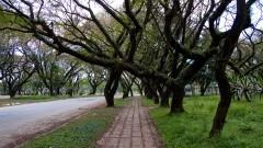 Árvores na av. Professor Lucio Martins Rodrigues