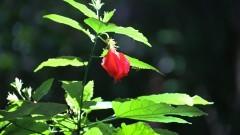 Detalhe de flor vermelha. Foto: Cecília Bastos/Jornal da USP