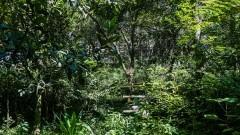 Detalhe de vegetação. Foto: Cecília Bastos/Jornal da USP