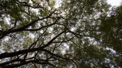 Árvores do campus. Foto: Marcos Santos/USP Imagens
