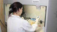 Membrana amniótica canina é inviável na terapia celular.Foto: Marcos Santos/USP Imagens