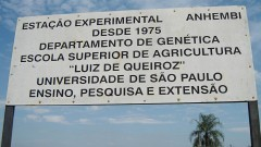 """Estação Experimental de Genética """"Anhumas"""" – Esalq"""