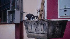 Cães e gatos de rua