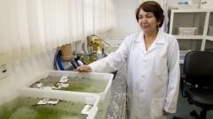 Na especialização, o IMTSP participa de programas de aprimoramento profissional do HCFMUSP, com vários programas específicos como Virologia, Parasitologia, Helmintologia e Protozoologia de Saúde Pública, dentro da área de Técnicas avançadas em Análises Clínicas. Foto: Marcos Santos/USP Imagens