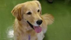 Projeto Pet Smile de Zooterapia. Foto: Marcos Santos/USP Imagens