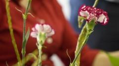Detalhe de ramo de flores no curso de Ikebana (arranjos florais) na Casa de Cultura Japonesa, ligada à Faculdade de Filosofia, Letras e Ciências Humanas (FFLCH). O curso é dado anualmente como parte das atividades de divulgação das arte tradicional japonesa. Foto: Pedro Bolle / USP Imagens