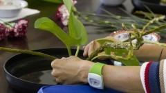 Detalhe de arrumação de planta no curso de Ikebana (arranjos de flores) na Casa de Cultura Japonesa, ligada à Faculdade de Filosofia, Letras e Ciências Humanas (FFLCH). O curso é dado anualmente como parte das atividades de divulgação das arte tradicional japonesa. Foto: Pedro Bolle / USP Imagens